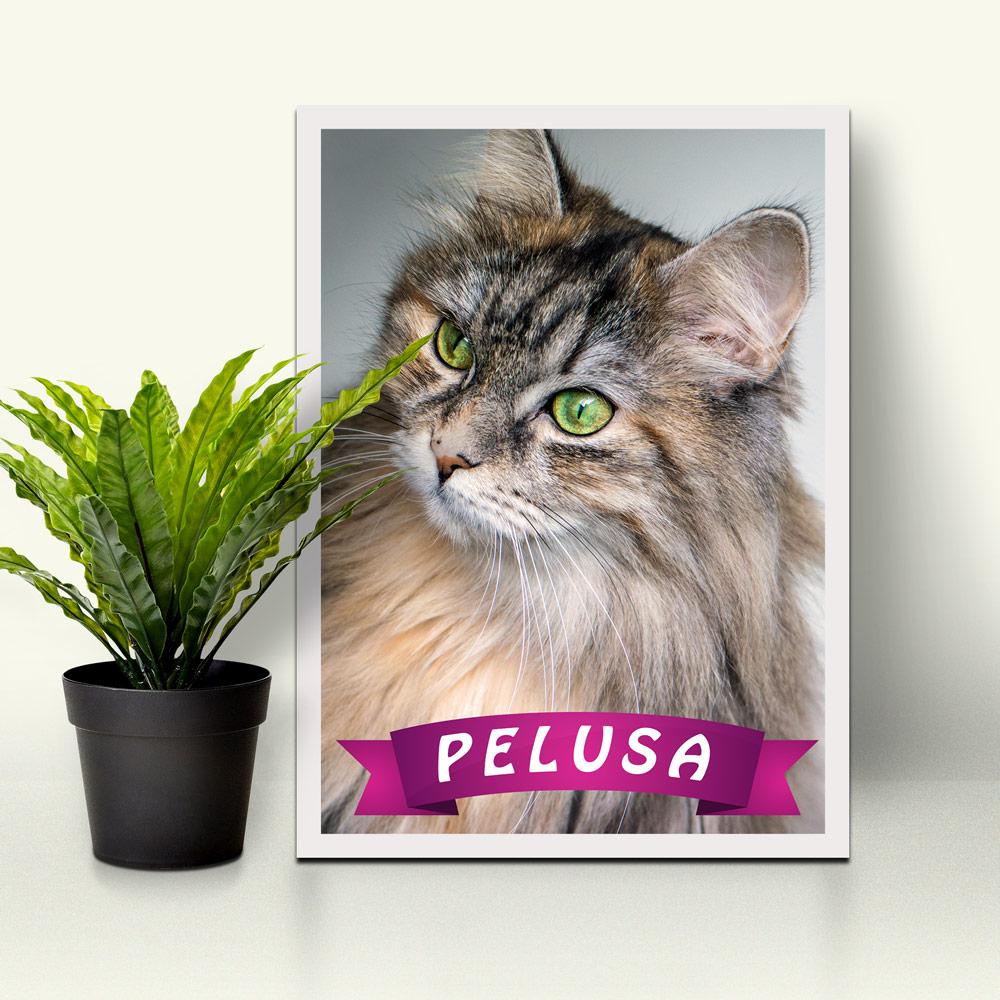 Cuadro Mascota con nombre - ParedMágica.com - Impresión y enmarcado ...